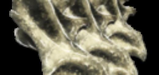 Sauropod Vertebra | Позвонки